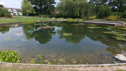 Pool with blanket weed problem prior to treatment with a PondTec ultrasonic unt