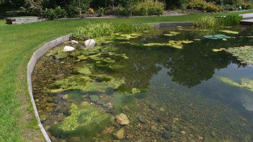 Controlling blanket weed with smart sonic ultrasound for Koi pond algae control